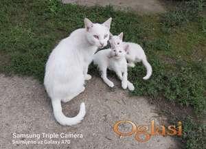 Beli ruski macici