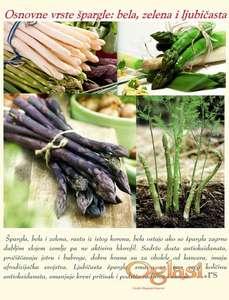 Špargla, rasad, koren, sadnica