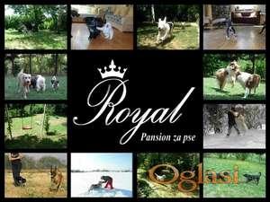 Pansion ROYAL za pse - Beograd