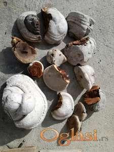 Trud gljive za dimljenje pcela vise kg