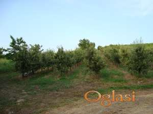Vinograd i vocnjak sa vikendicom -Beocin - gradjevinsko zemljište