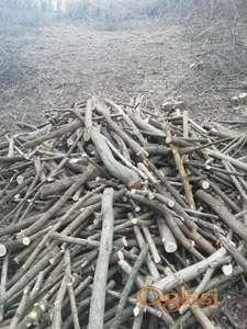 Prodajem ogrevno drvo Bagrem
