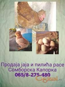 Jaja za nasad