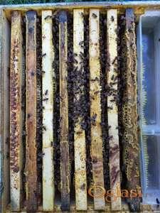 PRODAJEMO 7 pčelinjih društava. Ramovi dužina za DB, a visina LR. Matice mlade 2020. i ispitane