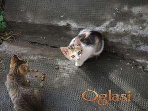 šareni mačići