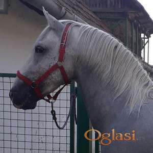 Oprema za konje