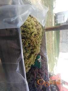 Prodajem grožđe.