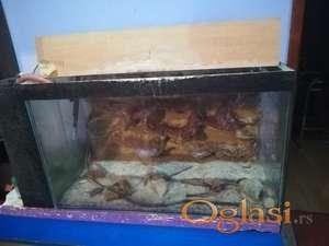 akvarijum 140 l