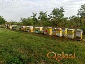 Pčele u LR košnicama