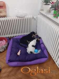 Lezaljke za pse POVOLJNO