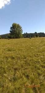Zemljište na Tari na prodaju