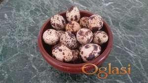 Jaja japanske prepelice