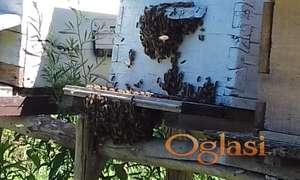Košnice-društva-rojevi-pčele-matice