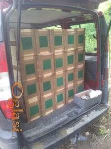 Paketni rojevi 1.2Kg pčela i mlada matica