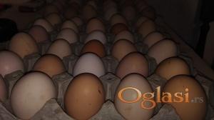 Domaca organska jaja