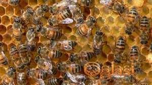 Pčelinja Društva