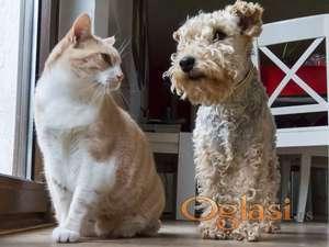 Uslužno šetanje pasa i čuvanje Vaših kućnih ljubimaca