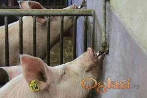 """Nosač pojilice za svinje 45˚ 1/2"""" Inox – Nerdjajući čelik"""
