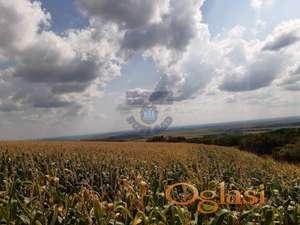 Poljoprivredno zemljište uknjiženo 1/1 na vlasnika. -ADRIJANA-0631678412