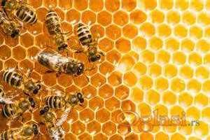 Pčelinja društva na DB ramu 12