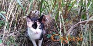 HITNO potrebna pomoc za lecenje / Udomljavaju se macici