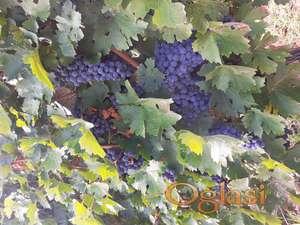 Na prodaju grozdje