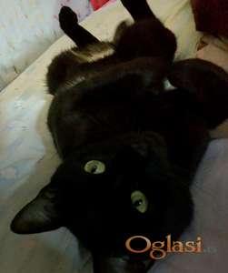 Poklanjam crnog mačora