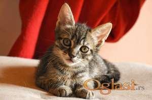 Preslatke mace koje traže dom