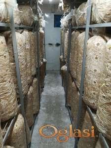 Zasejani dzakovi Bukovace i pomoć u proizvodnji