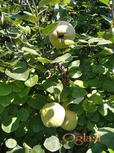 Dunje i jabuke rod 2021