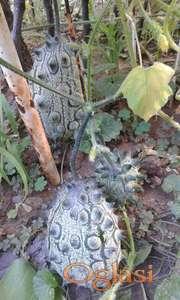 Kivano Africka Rogata dinja seme