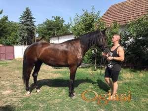 Kobila za uzgajanje