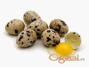 Japaneseke prepelice i jaja