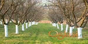 Prskanje vocaka, krečenje stabala, košenje trave