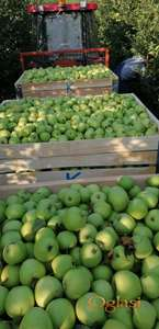 Jabuka za rakiju