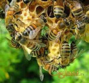Košnice sa pčelama, pološke i med