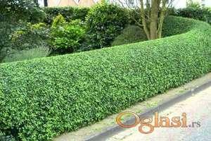 Uslužno kosenje trave i uređivanje žive ograde