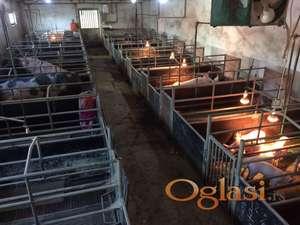 Kuća sa farmom svinja