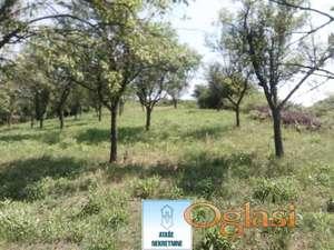 Barajevo, Guncati, poljoprivredno zemljište ID#29051