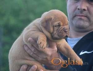 Stence BORDOSKE DOGE na prodaju