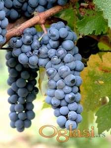 Prodajem ZEMLJU NA FRUŠKOJ GORI za vinograd, voćnjak