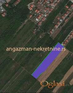 Čukarica - Savska terasa 1,37ha – 7900eur/ar ID#14838