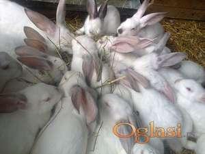 Stajsko djubrivo od zeceva