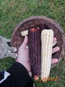 Crveni i beli osmak kukuruz u zrnu