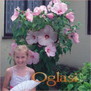 sadnice cveća, semena, lukovice