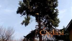 Krčenje, obaranje i rusenje stabala