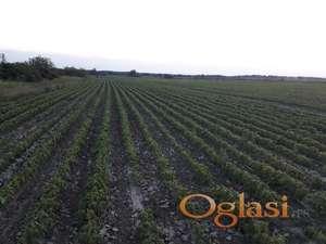 Poljoprivredno zemljište Begeč