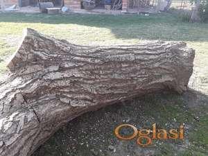 Orahova debla