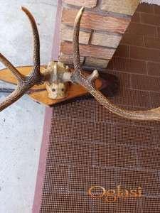 Prodajem rogove jelena